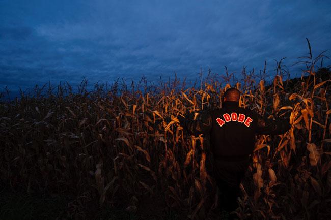 tw-cornfield