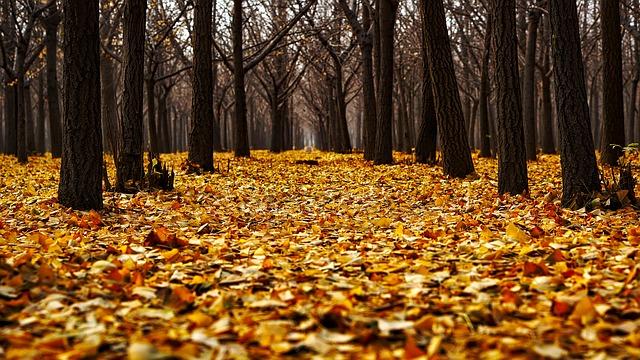 森林の落ち葉は土に還っていく 自然の循環がある