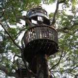 木の上の秘密基地