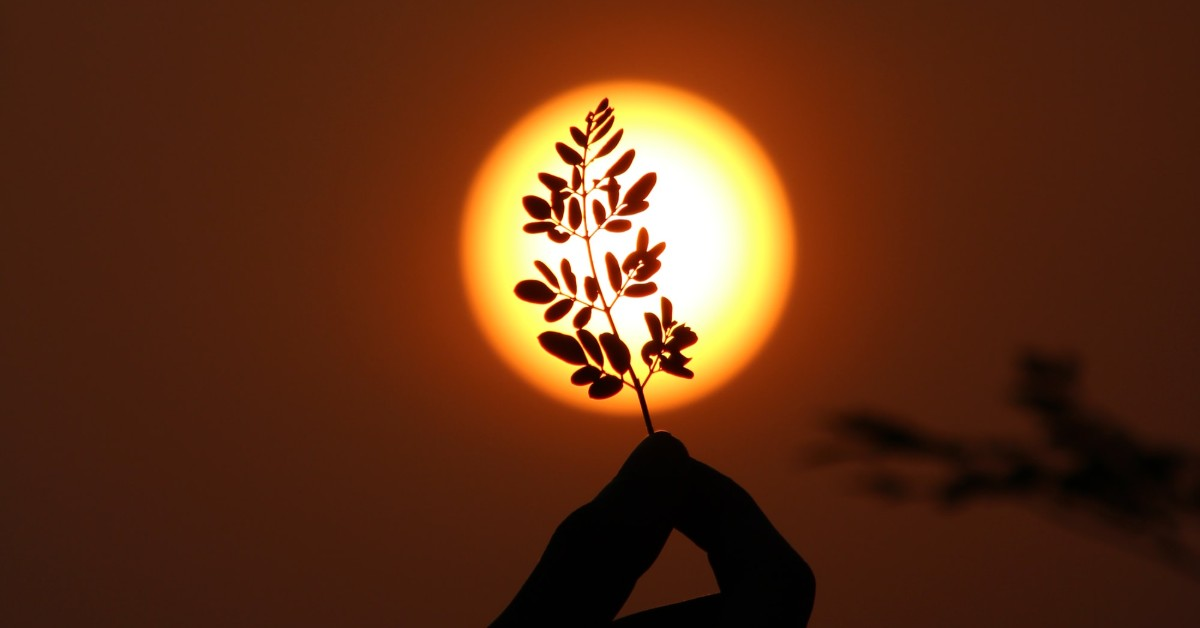 A small leafy twig held between two fingers against the outline of the sun in the background