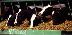 活水装置新ん泉酪農畜産