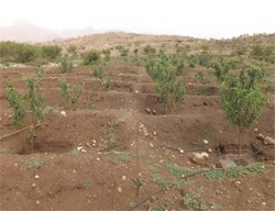 Pic 4: Nakfa, Eritrea. Drip irrigation for reforestation.
