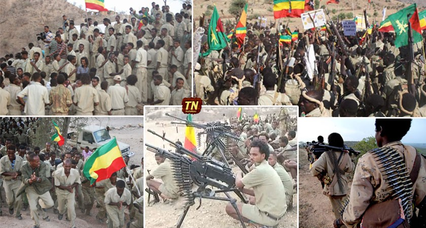 The All Ethiopian Liberation Front/Force (AELF) - የመላው ኢትዮጵያ ነጻ አውጪ ግንባር / ሃይል