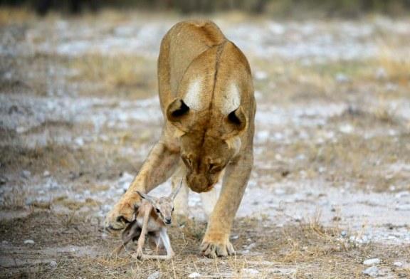 Luanesha nuk e ha, adopton kafshën e vogël (foto)
