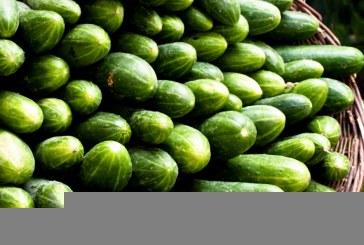 E dhëna: Shqipëria ushqen Kosovën me kastravecë, i eksporton 3 milion kg në vit