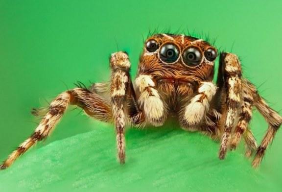 Shkenca: merimangat në shtëpi, të dobishme dhe jo aq të frikshme