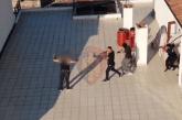 Policia bën zap terrorizuesit e Pogradecit: mes tyre, edhe i regjuri Anterio Kaloshi