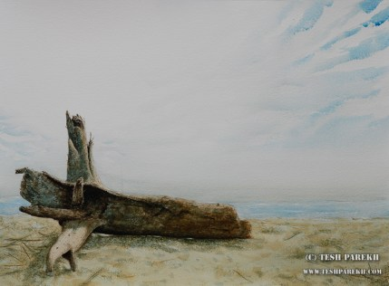 Driftwood. 21x29. Watercolor on paper.