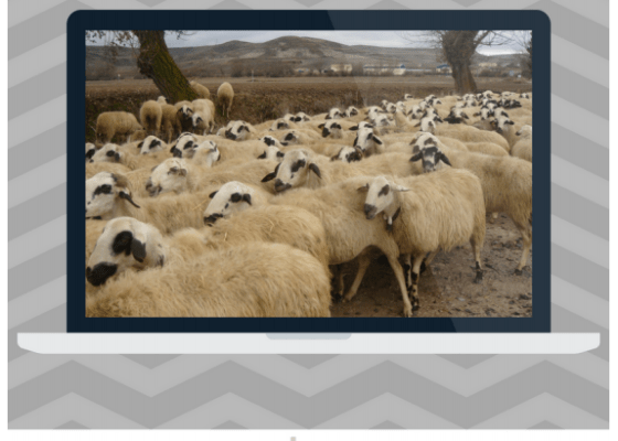 Herd Mentality and Mob Behavior Unit