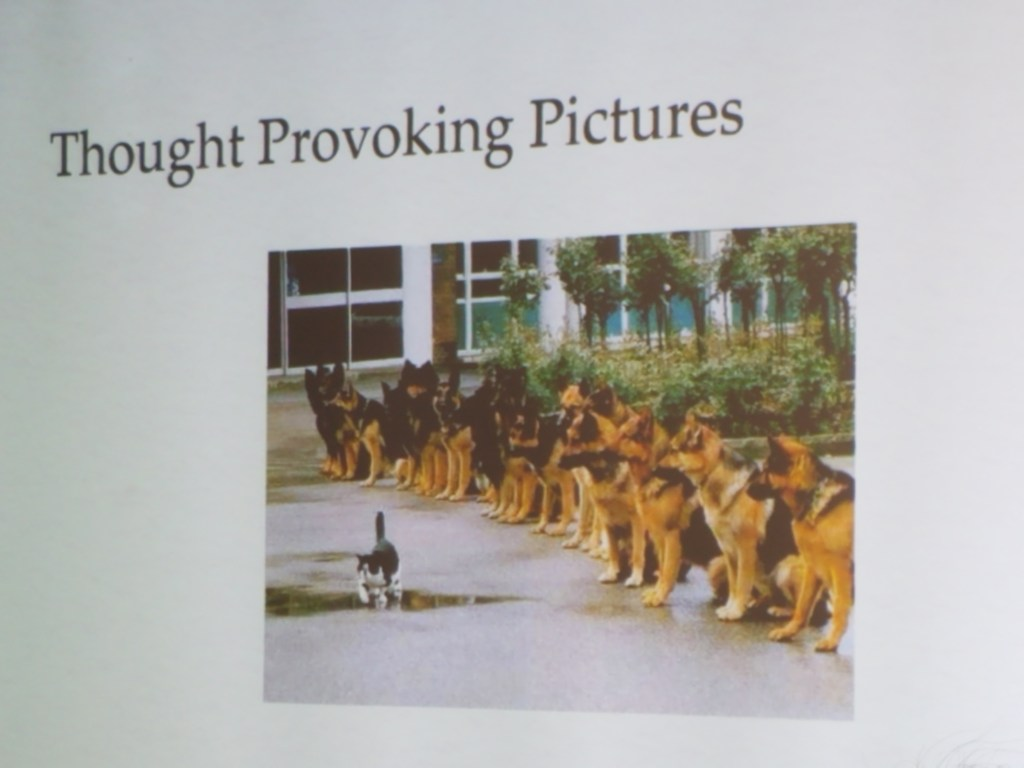 """Image of slide with the phrase """"Through provoking Pictures."""" The slide includes an image of a line of dogs watching a cat walk."""