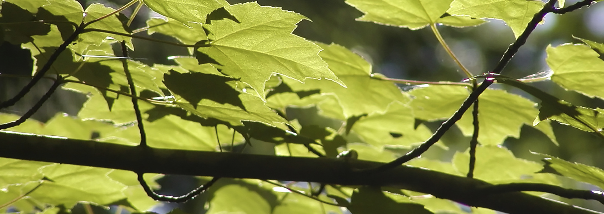 Tesoro Woods Flooring Environmental Attribute Guide