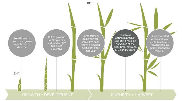 World Bamboo Day 2017 Bamboo Growth Rapidly Renewable