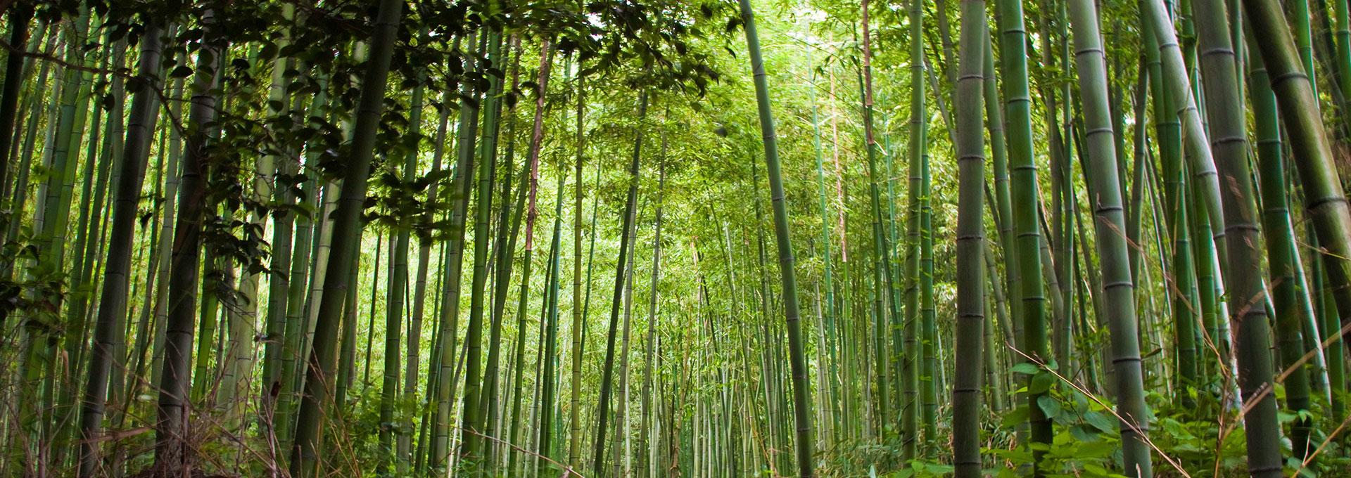 Tesoro Woods - MOSO® Bamboo Indoor Air Quality