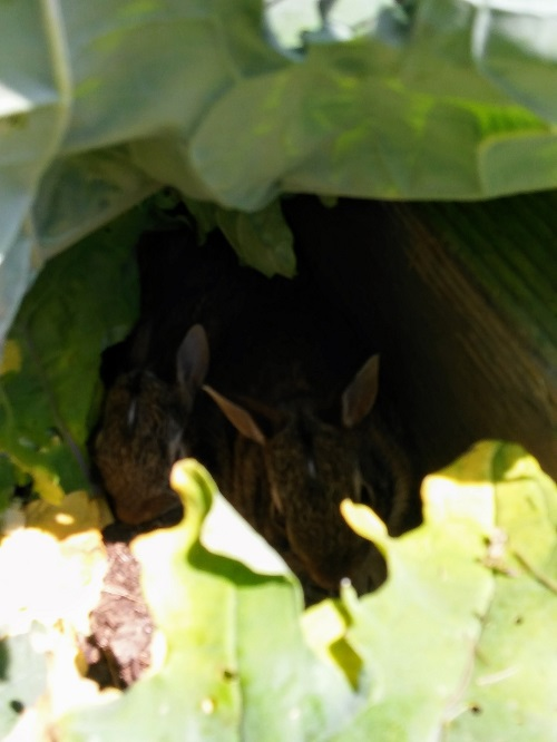 Baby Bunnies in My Garden: Please Let Me Stay and Rest
