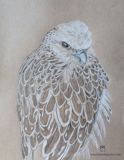 Gyrfalcon by Amanda Makepeace