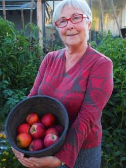 Julie picks some apples.