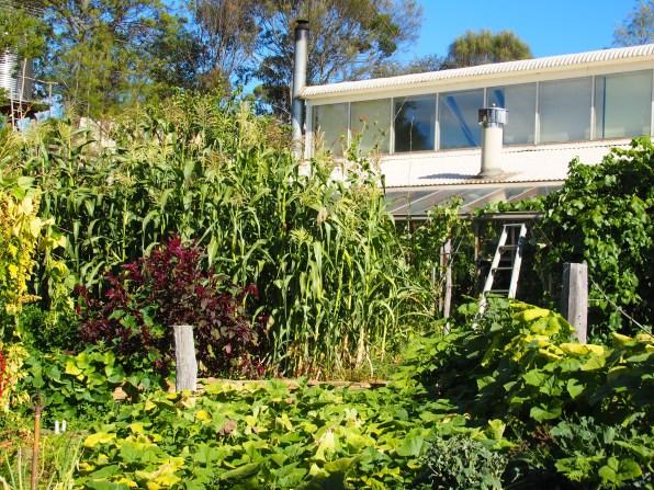 The Melliodora 'kitchen garden'.