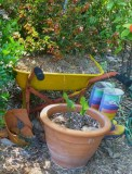 Loved this rainbow wellies in the same garden as the wine bottle. No black boots for our friend who gardens here!
