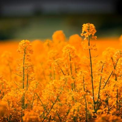 Summer Solstice Affirmation for Abundance, Success, and Love