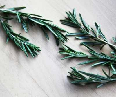 Aromatherapy and Herbs for Yule - Rosemary