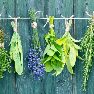 The 12 Best Herbs for Protection Magic