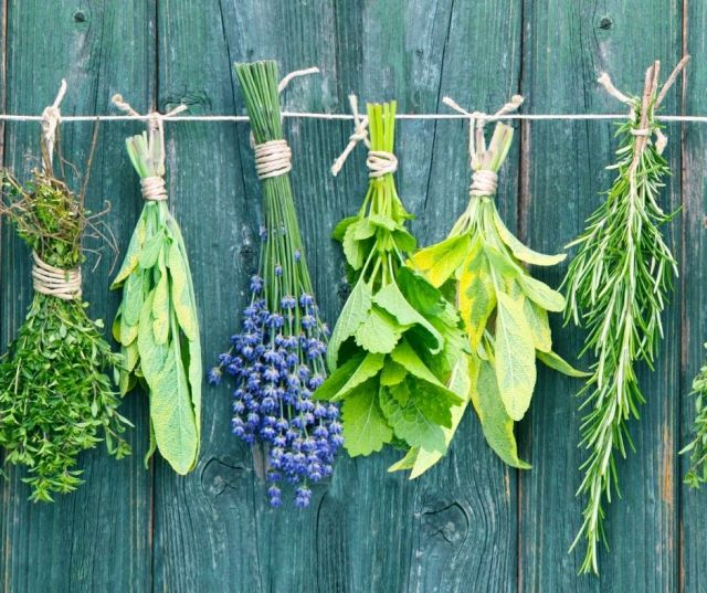 Protection Magick Herbs