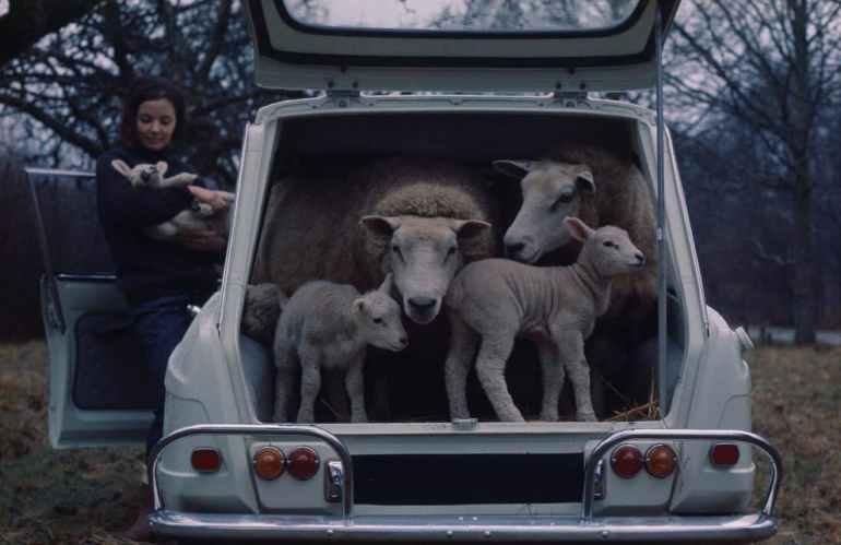 Il grande bagagliaio della Citroën AMI6