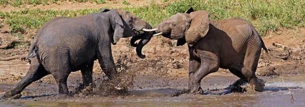 Fotoreise_Fotosafari_Fotoworkshop_Benny-Rebel_Afrika_Tansania_009_Elefant