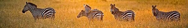 Fotoreise_Fotosafari_Fotoworkshop_Benny-Rebel_Afrika_Tansania_036_Serengeti