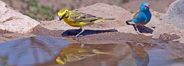 Fotoreise_Fotosafari_Fotoworkshop_Benny-Rebel_Afrika_Tansania_054_Wasserloch