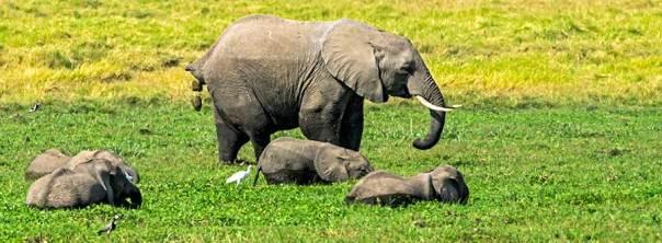 Fotoreise_Foto-Safari_Kenia_Lake_Amboseli_DSC3888