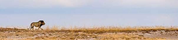 Fotoreise_Foto-Safari_Kenia_Lake_Amboseli_DSC8750
