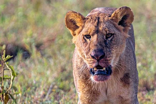 Fotoreise_Foto-Safari_Kenia_Lake_Nakuru_DSC5008