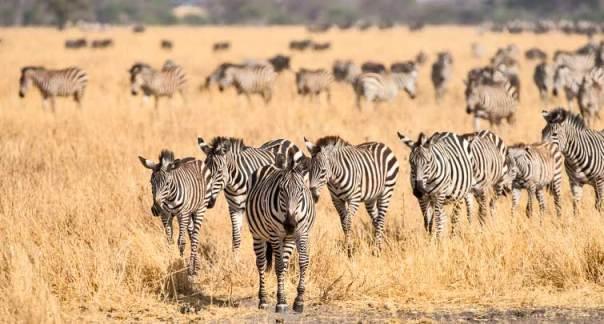 Fotoreise_Fotosafari_Tansania_Afrika_011
