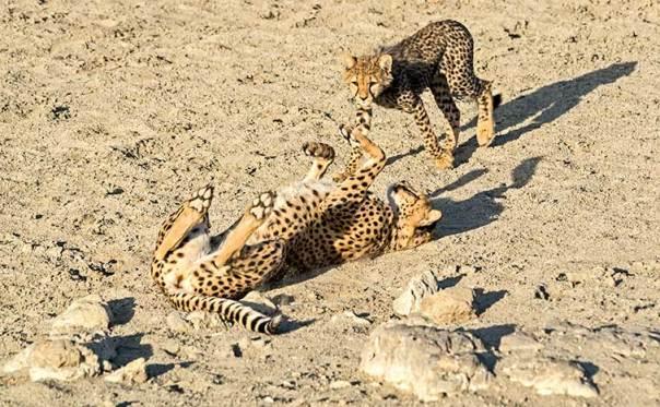 Fotoreise_Fotosafari_Tansania_Afrika_040