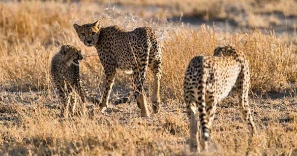 Fotoreise_Fotosafari_Tansania_Afrika_042