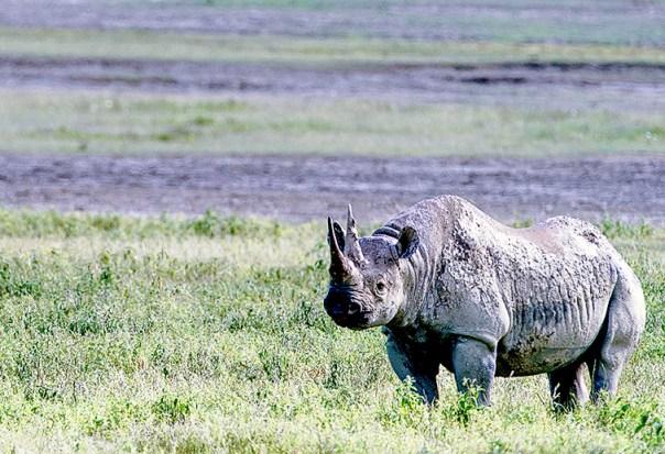 Fotoreise_Fotosafari_Afrika_Tansania_Benny_Rebel_DSC0083