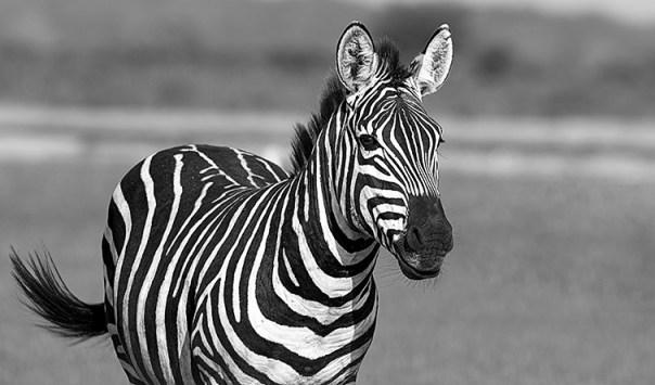 Fotoreise_Fotosafari_Afrika_Tansania_Benny_Rebel_DSC0199