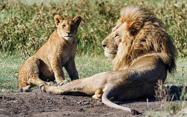 Fotoreise_Fotosafari_Afrika_Tansania_Benny_Rebel_DSC0397