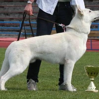Koerad 26