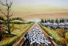 Le vieux berger et ses moutons  ( Chili )