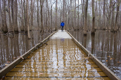 5b43f-congaree2bnational2bpark2bflooded2b2 Congaree National Park - The Park That Is Not A Swamp