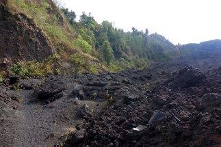 Roche volcanique et vaillante végétation. Cette dernière coulée de lave remonte à quelques mois seulement.