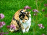 Sommer Katze