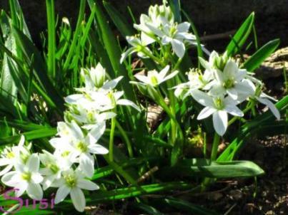Frühling Blumen Weiß