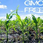 Discount on GMO Testing Charges – New Year Offer!
