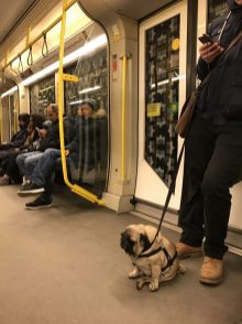 U-Bahn fahren mit Mops © Michael Kaltenecker
