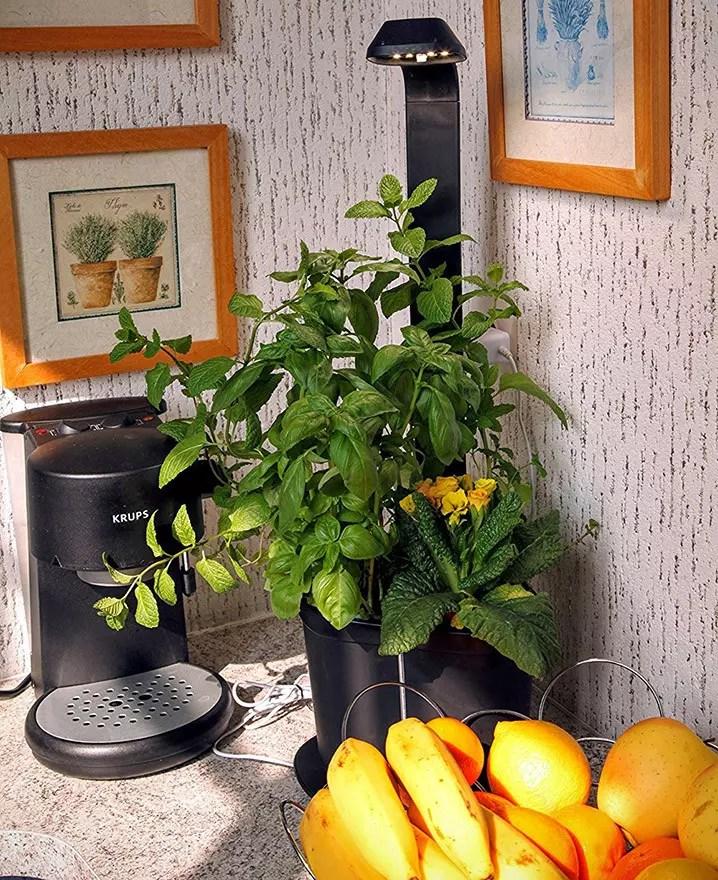 Tregren Genie noir 3 plantes mini Jardinière et Potager d'intérieur