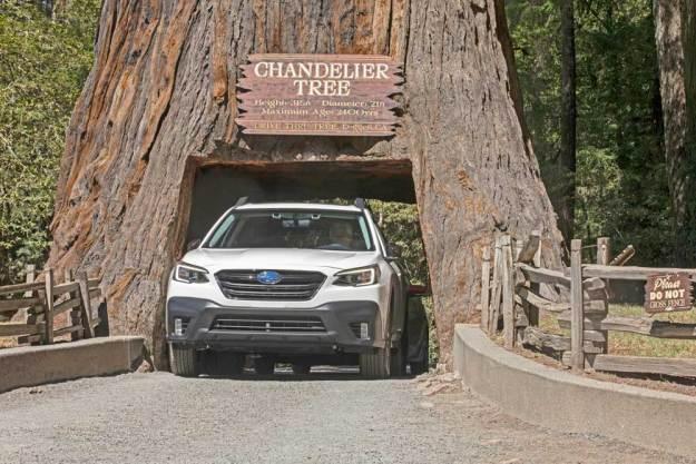 Subaru-Outback-Tree