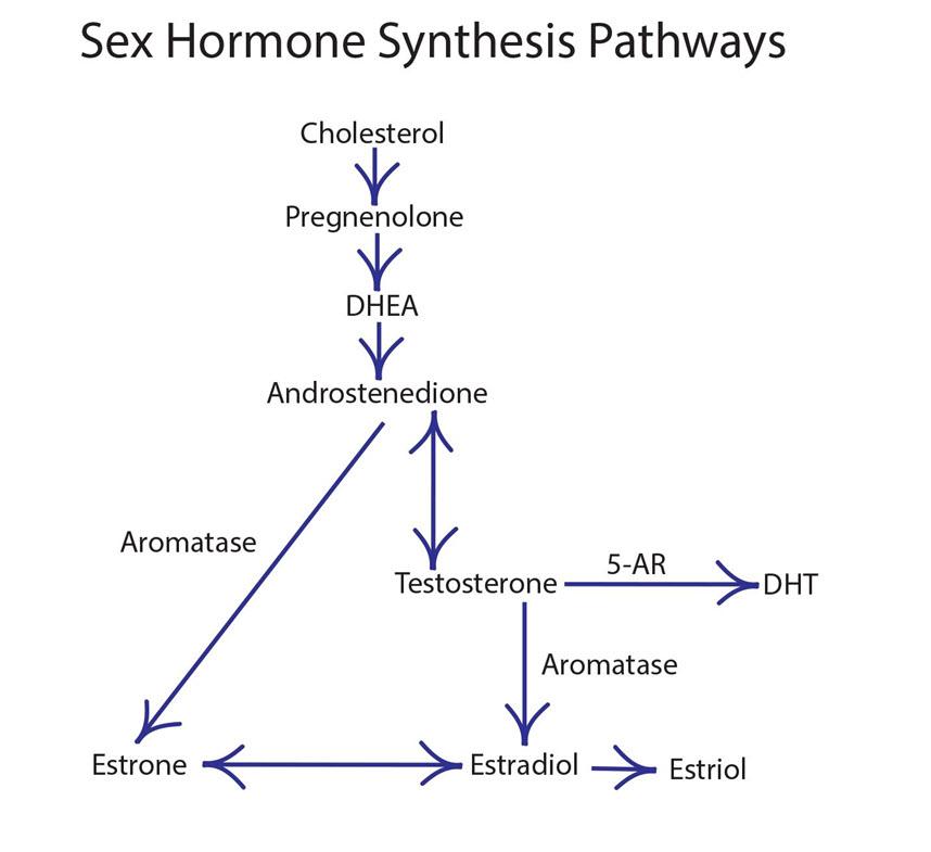 hormone cascade pregnenolone DHEA